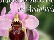 Nuevo libro. Guía campo orquídeas silvestres Andalucía