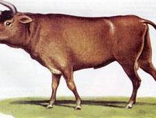 origen ganado remonta grupo solo animales