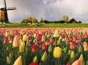Abre Floriade 2012, mayor evento horticultura medio ambiente mundo