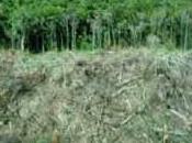 deforestación consecuencias