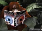 EEUU incluso orangunates seguidores tecnología multimedia