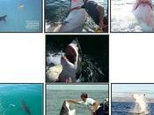 historia tiburon blanco agradece pescador Australiano haberle salvado vida
