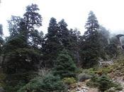 Ascenso Pico Torrecilla. Ruta Quejigales Sierra Nieves (Málaga)