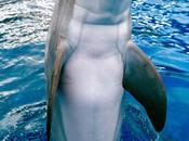 También delfines ballenas
