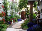 Córdoba, patios llenos vida