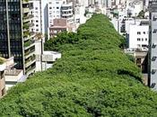 Túnel verde Calle Gonçalo Carvalho Porto Alegre