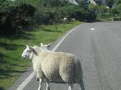ESCOCIA: Ruta días Highlands.
