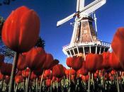 molino viento Holanda