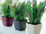Hogares plantas, lugares aire puro