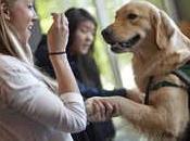 Universidades buscan reducir perros estrés estudiantes