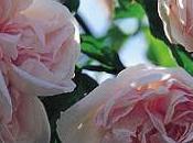 jardín perfumado