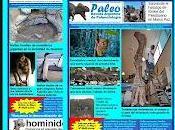 """Paleo, Revista Argentina Paleontologia. Numeros"