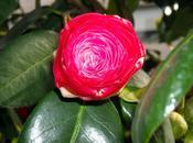 belleza cosas pequeñas (aprovechando macro cámara compacta)