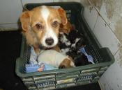 urgente!!! sacrifican junio. mama cachorritos. (badajoz)