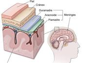 Meningitis viral: prevención clave