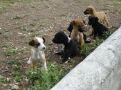 Urgente!!!. Cachorritos tamaño pequeño madre .(pueblo Jaén).