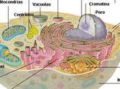 Argumento: 'Las células también tienen capacidad para sentir'