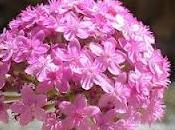 ¿Cómo florecen plantas?