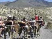 Paseos camello Almería