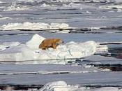 Ayúdanos salvar Ártico