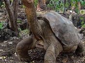 Muere Galápagos 'Solitario George', última tortuga macho especie