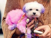 Celebrities perros colores ¿teñirías tuyo?