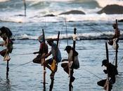 catrinastewart: Stilt Fishing Lanka