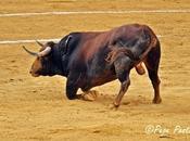 """fiesta toro desploma"""", Antonio Lorca"""