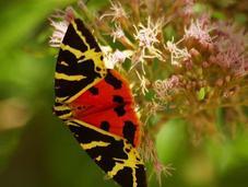 Insectos polillas