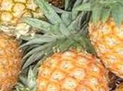 piña rica bromelina, fibra, pectina vitamina