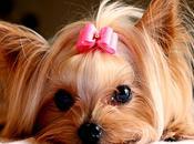 Diferentes Sitios Venta Perros