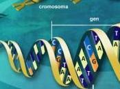 secuenciación genoma humano punto ingresar área clónica.