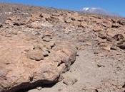 rocas volcánicas desierto Atacama pistas sobre vida Marte