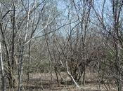 Bosques Deciduo Venezuela ubicación