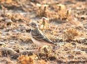 Aves navarra-birds navarra