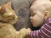 vídeos divertidos bebés gatos