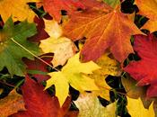 otoño está aquí