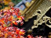 Consejos para visitar Japón