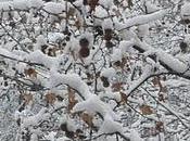 Nieve: poema hace años