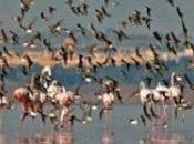 Mundial Aves