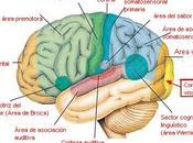 pasa nuestro cerebro mientras dormimos?