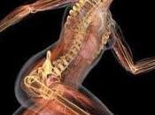Apuntes Anatomía craneo, huesos, musculos articulaciones