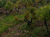 Mineralidad vinos, mejor saber donde proviene