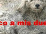 """""""perros encontrados"""""""