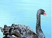 futuro depende actitud ante suerte cisnes negros