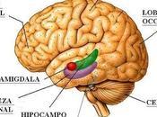 cerebro función hipocampo memoria