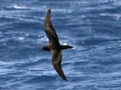 Lanzarote pelagics (III)