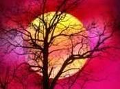 Samhain, celebrando vida muerte
