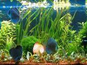 contemplación peces tanque reduce presión sanguínea retarda ritmo cardíaco.