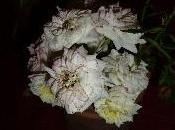 Roses Tardor (II) Rosas Ferrer